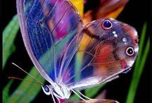 ART: Butterflies