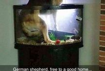 Hunde / Lol