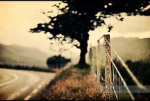 Photo Ideas! / by Maria Cabal