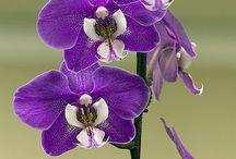 удивительные цветы