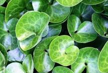 Greenishealing