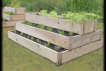 Gardening Ideas / Ideas for gardening on our own little piece of earth