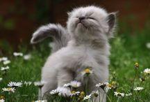 Cats xoxo♡
