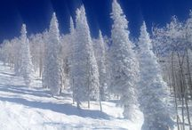 Winter Wonderland / Winter is coming- let's embrace it with an open heart!