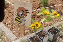 Greenpeace + Olyplant.gr / Στις 11 Μαΐου η Greenpeace οργάνωσε μια πολύ όμορφη γιορτή με θέμα την προστασία των μελισσών! Φυσικά δεν θα μπορούσαμε να λείπουμε εμείς από εκεί και να συμβάλουμε με τον τρόπο που ξέρουμε καλύτερα.