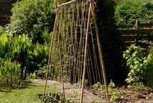 My garden / Getting to know my new garden