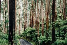 into the woods. // / Forest and nature photography