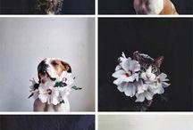 Květinové koruny