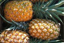 tropical inspiration -