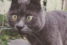 Kevin, le chat étonné / Le chat qui a l'air constamment étonné !