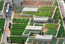 Urban farming worldwide