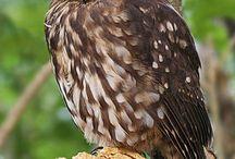 Northland conservation / Bream Head Reserve