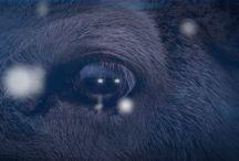 Audiovisual / Proyectos en 3D, Cinemaprahic, anuncios web