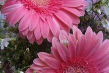 Nature, flowers etc