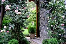 Gardens, Pathways and Ideas / by Kathy Ahrens