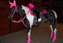 Horse!!!