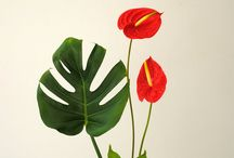 꽃그림자료
