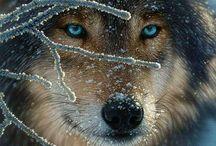 Animali / bellezza  magnetismo dolcezza