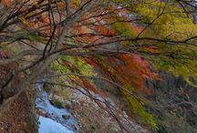Autumn in Korean