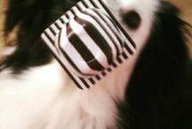 Aiko the dog ❤