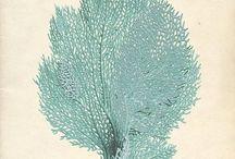Corail/coral / Imprimé, dessins, objets, motifs...
