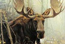 Marvelous Moose / by Nicole