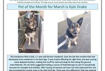 Hydrotherapy Pet of the Month