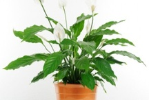 Plants Toxic to Pets