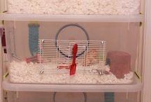 Hamster chomik
