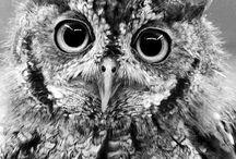Animals / by Emma Fosnaugh
