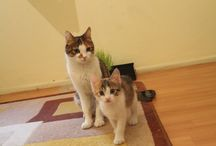 My Cats #vani #karamel