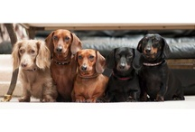Doxie's RULE