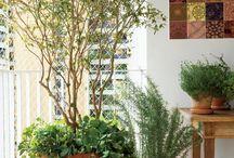 Plantas para vaso e interiores