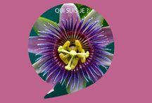 Nos belles plantes