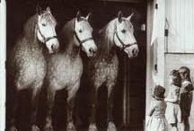 i want...a pony.... / by Amy Brennan McDaniel