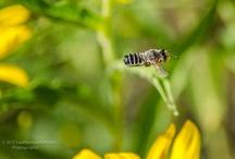 BEES and TASMANIA
