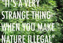 Should be legal / by Tonya Drayton