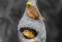 Ninhos de pássaros
