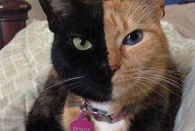 cats/ Katzen