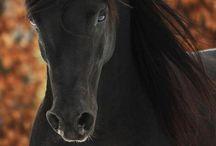 Lovely Horses / Lovely horse photos ♡
