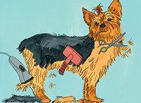 grooming dog