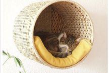 Kittens / Kittens jeeeeeei