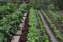Palstaviljely /garden plot