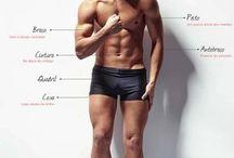 Proporção de corpo.  para homens.