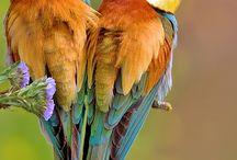 Birds / by Diana Villabon-Perez