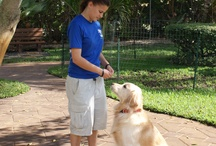 Simmons DogWorks  / Learn, Play, Train.  Cannine Obedience and Behavior.