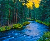 Favorite Places & Spaces / 1. I love my home in Oregon 2. Mt Hood  3. Columbia River Gorge 4. Oregon Coast  5.   / by Kathy Johnson