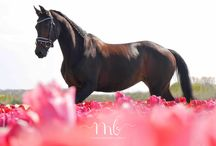 Paarden foto's