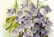 Картинки Ботаника