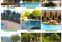 Ideas for Poolside Greenery